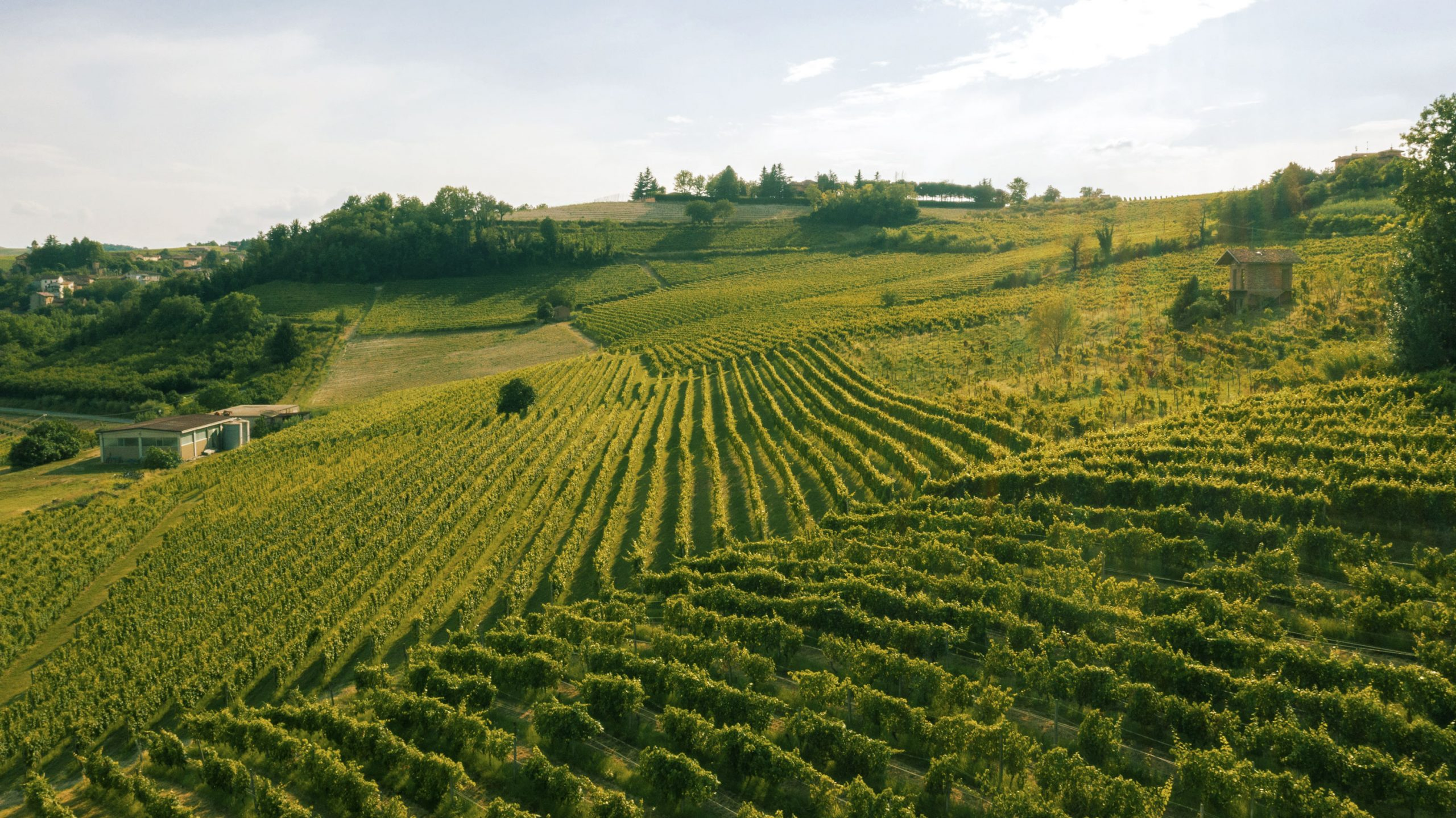 Monteruello   Monferrato   www.monteruello.it