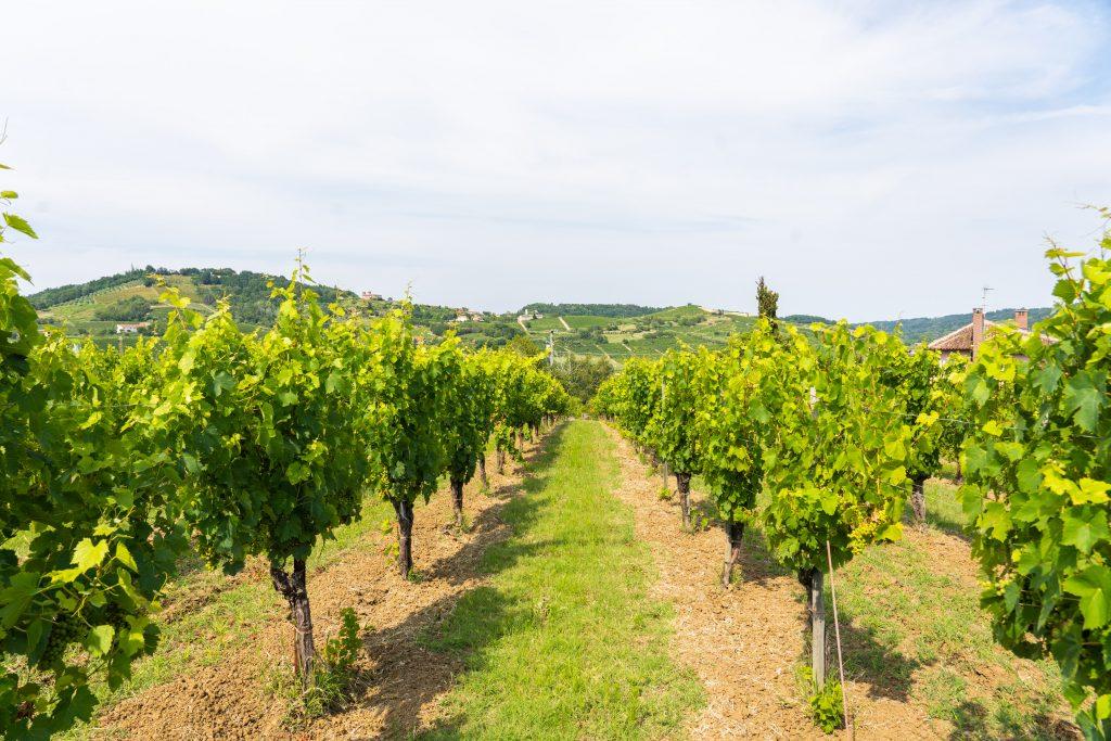 Monteruello | Monferrato | www.monteruello.it